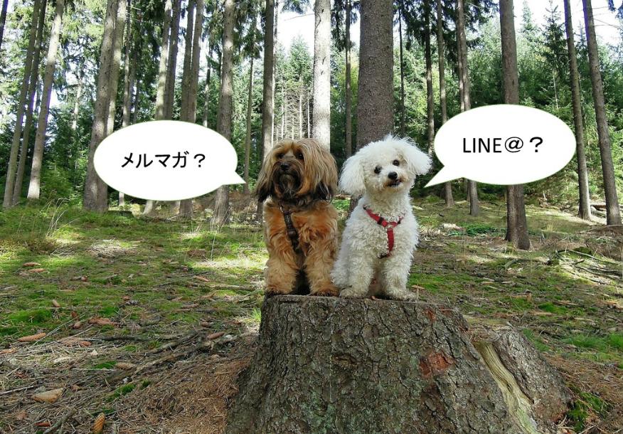 LINE@かメルマガか