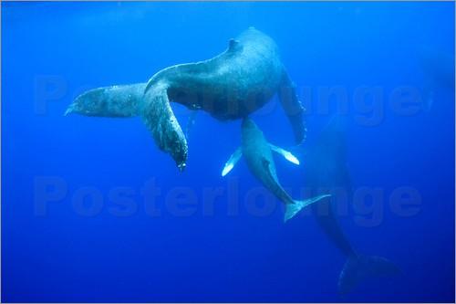 4 way chess online stewart warner gauge wiring diagram the blue whale | lingdigi