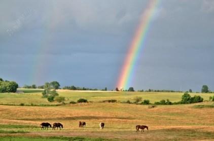 Chasing a Rainbow(w)