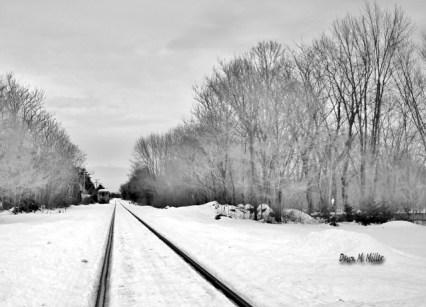 Winter Trees # (1)