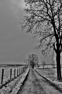 Winter Trees # (2)