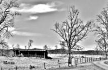 Winter Trees # (5)