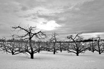 Winter Trees # (6)