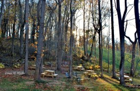 november-forest-at-arterra-winery
