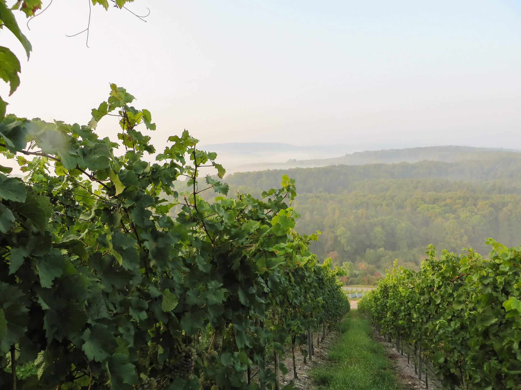 Blick vom Sandberg auf den östlichen Enzkreis.
