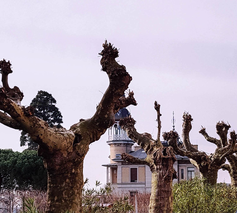 Frankreich ist nicht mehr weit entfernt - auch den Bäumen sieht man es an.