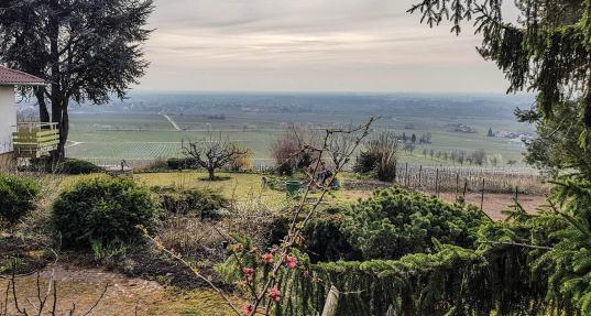 Blick über die Weinberge in die Rheinebene.