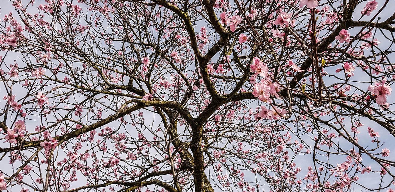Blütentraum in Rosa.