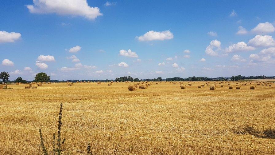 Weiter Himmel über Getreidefeldern.