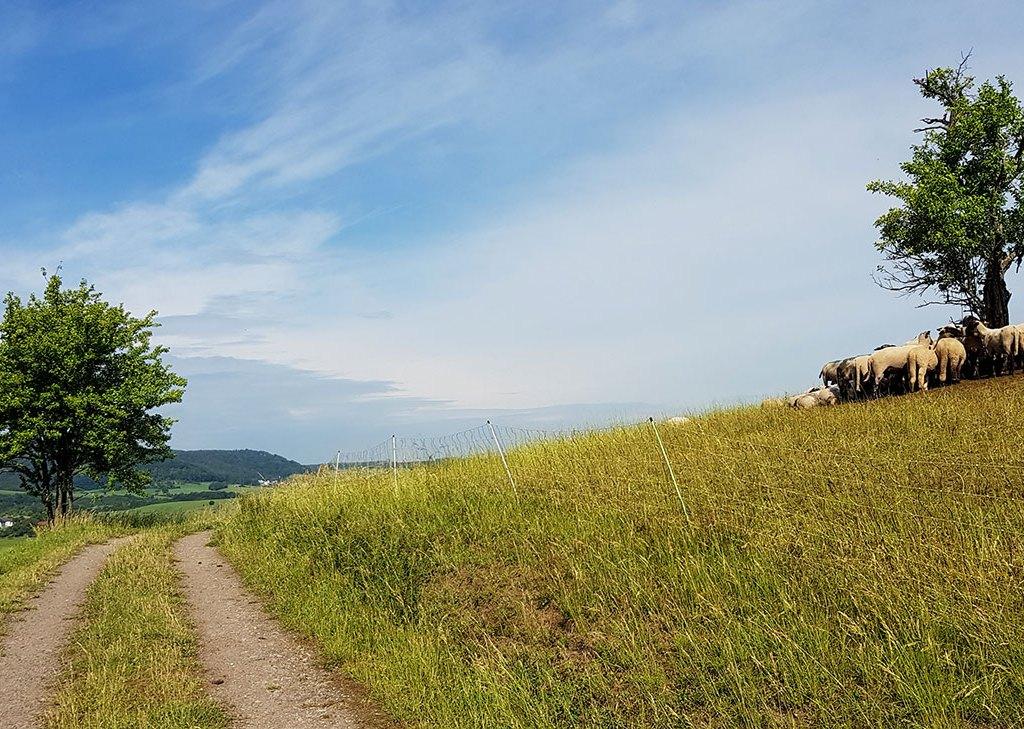 Felsenweg5 in der Südeifel