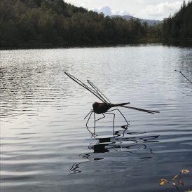 Dragonfly Lochan Spling