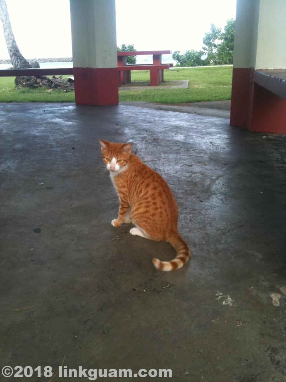 グアム ねこ 猫