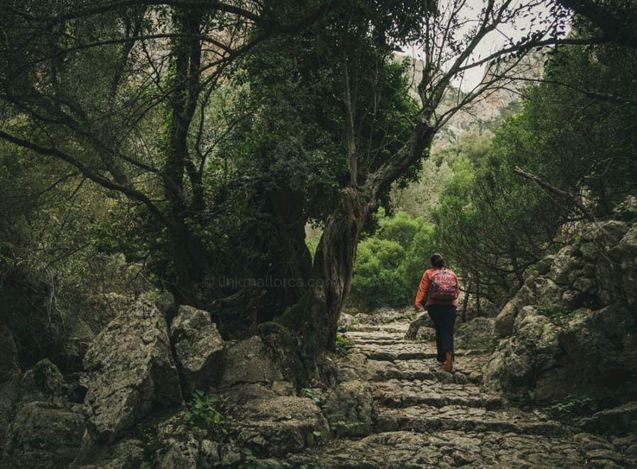 El Barranc de Biniaraix, Sóller, Serra de Tramuntana, Mallorca
