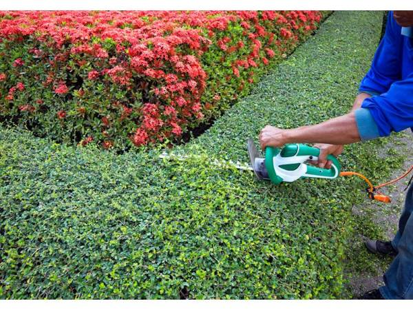 highly successful & growing landscaping