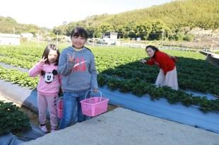 【親子遊】苗栗~馬拉邦山-山大王草莓王國採草莓(10Y&8Y)