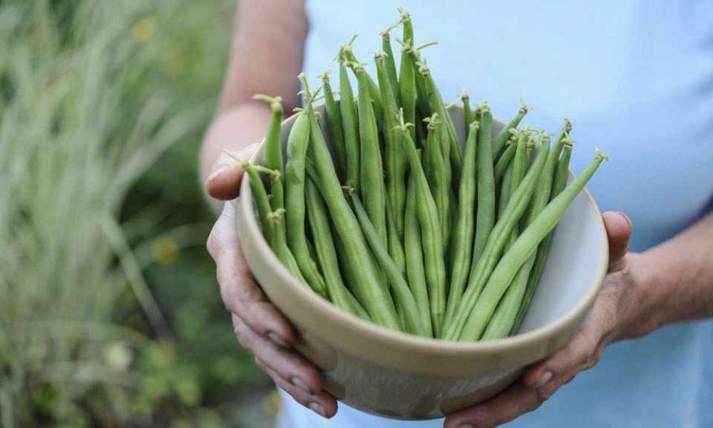四季豆的熱量、醣質?減肥怎樣吃才能不發胖的小祕訣跟方法   Linky