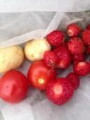 skörd tomater
