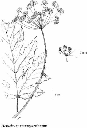 EFlora BC: Electronic Atlas of the Flora of BC