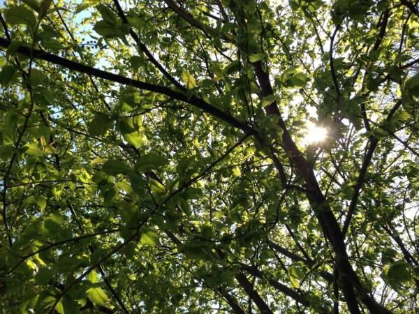 Photo 2014-04-19 15 45 16