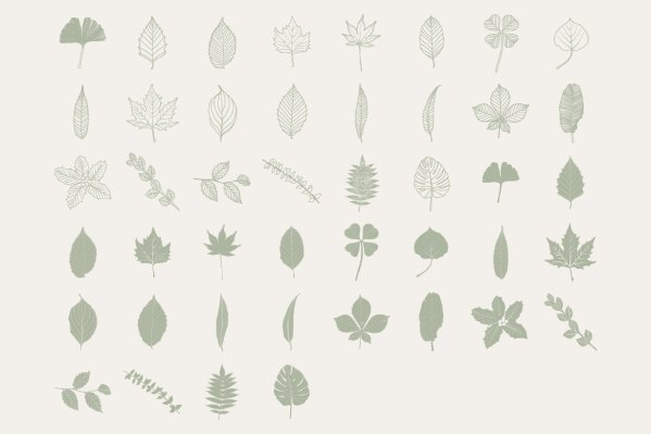 Hand Drawn Leaf Library 3
