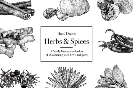 HandDrawn Herbs & Spices