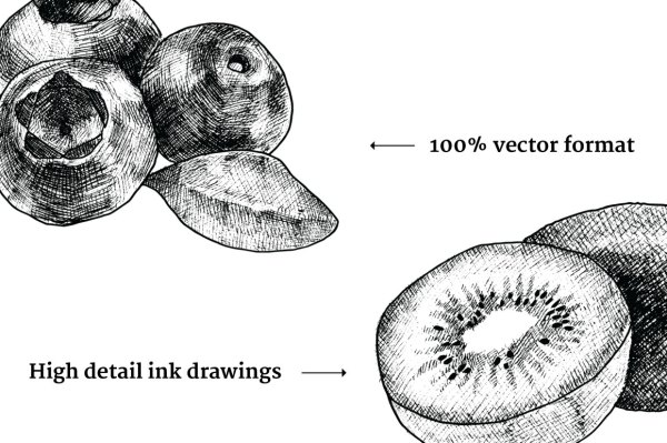 Hand Drawn Vintage Fruit Illustrations 3