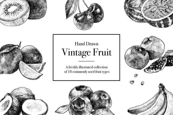 Hand Drawn Vintage Fruit Illustrations