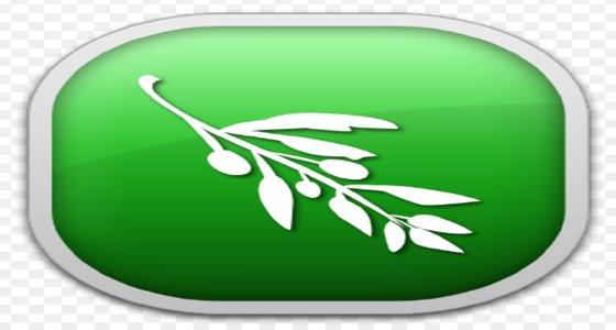 olive-editor-video