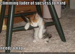 Lol-cats-success