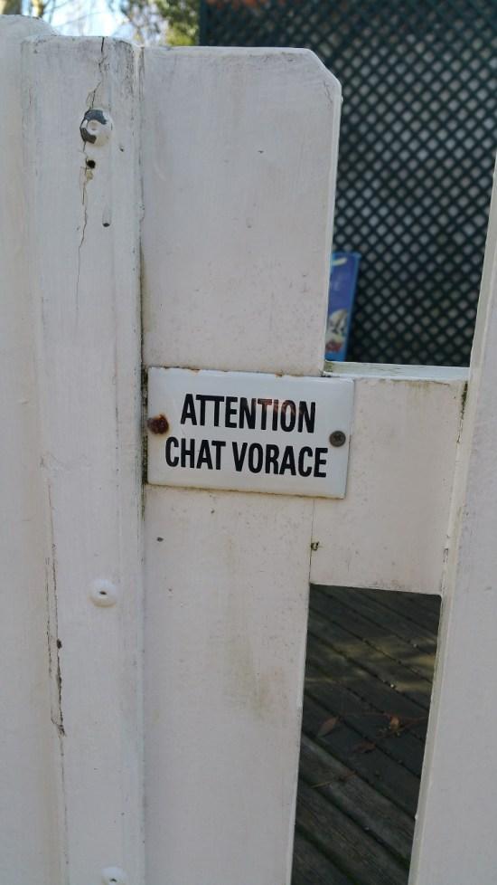 chat_vorace