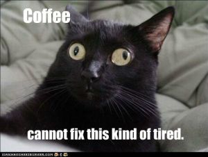 lolcat-tired