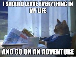 adventure-realization-cat