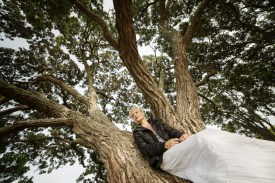 bride sitting under a tree at bastion point