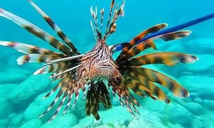October lionfish contest, win $400