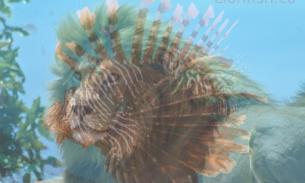 Why is a lionfish called a lionfish?