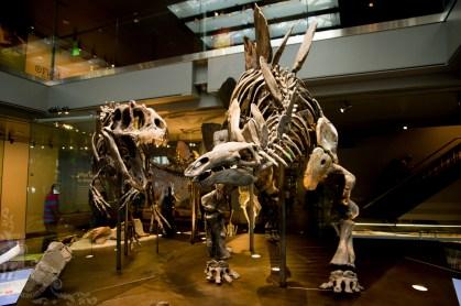 Allosaurus vs. Stegosaur