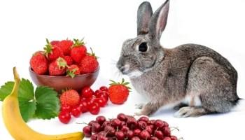 can rabbits eat fruits