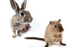 rabbit hamster as pets