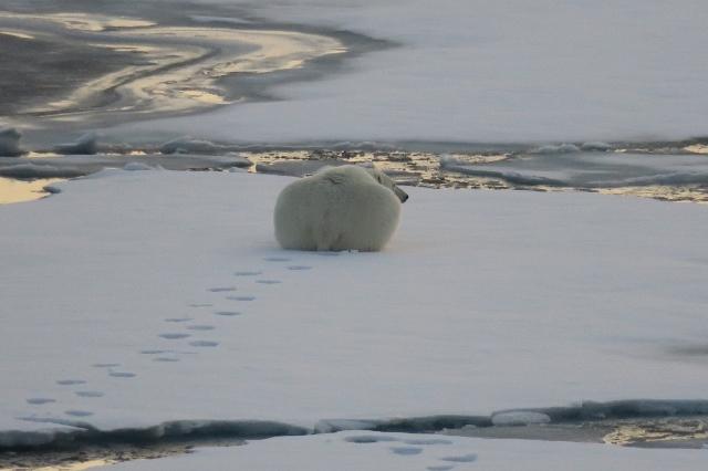Spitzbergen2019-16