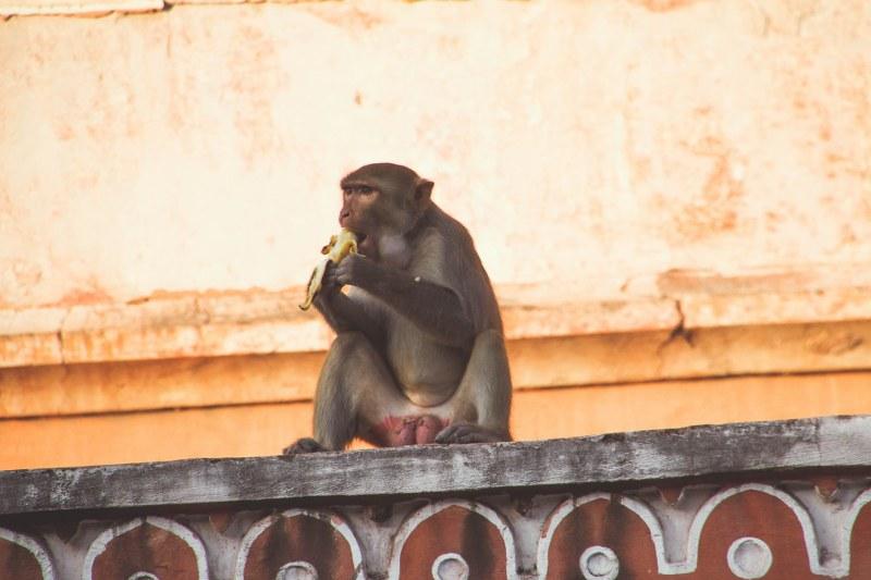India-Varanasi-rasarit-387_800x533