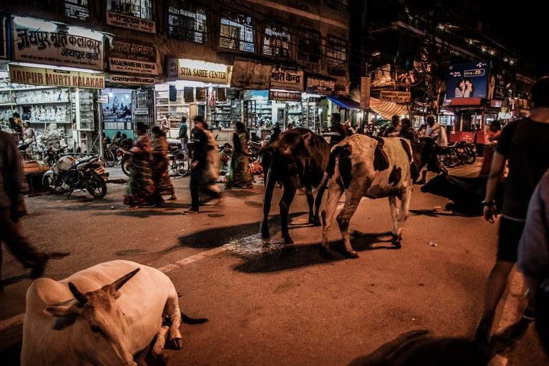 India-Varanasi-rasarit-92_800x533