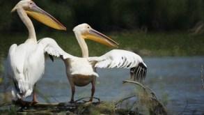 Workshop de fotografie de natura in Delta Dunarii