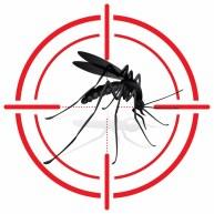 De ce insistă țânțarii să te bâzâie pe la urechi?