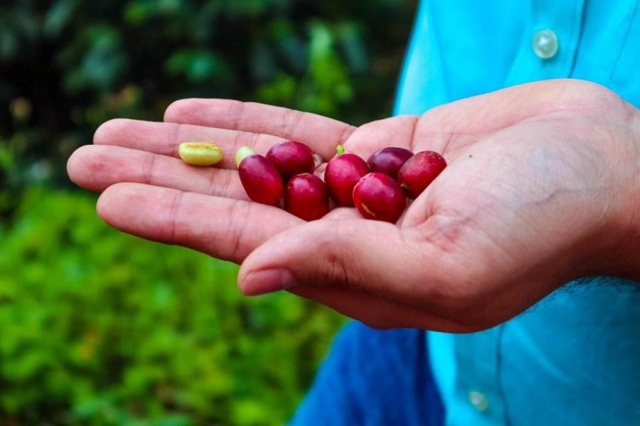 plantatie-de-cafea-BeanZ-Nicaragua-1-of-376-101_1575x1050
