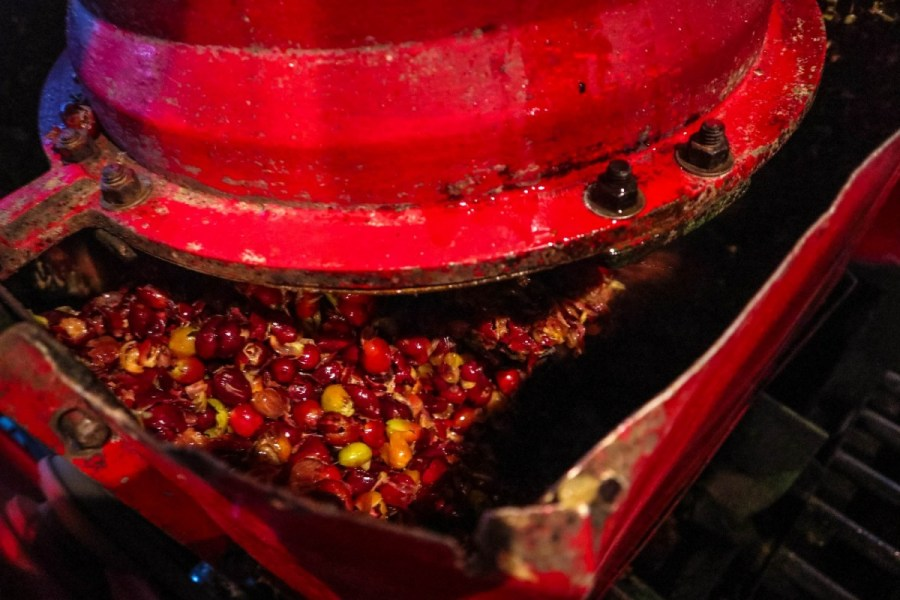 plantatie-de-cafea-BeanZ-Nicaragua-1-of-376-258_1575x1050