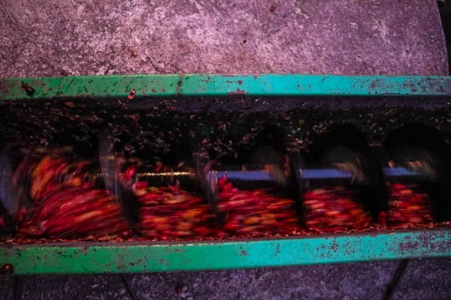 plantatie-de-cafea-BeanZ-Nicaragua-1-of-376-265_1575x1050