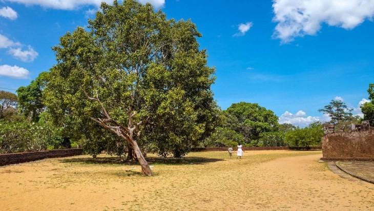 Polonnaruwa-Sri-Lanka-77_1024x578