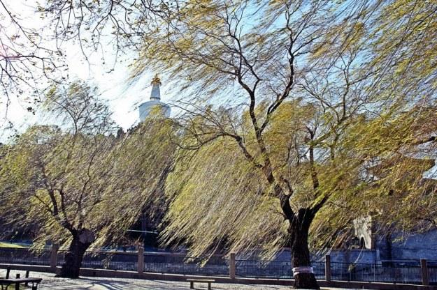 Beijing z2 33 Beihai parc color