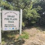Dwarf Pines Plains Preserve