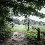 Forsythe Meadow County Park